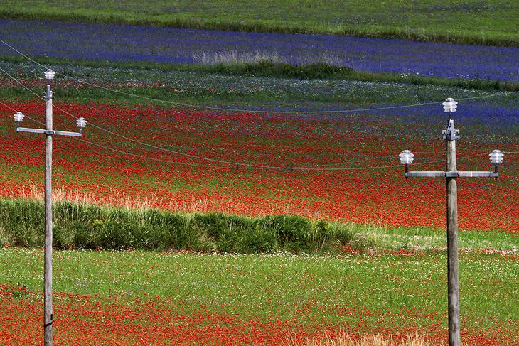 Blooming, Castelluccio di Norcia 02