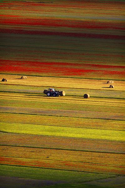 Blooming, Castelluccio di Norcia 03