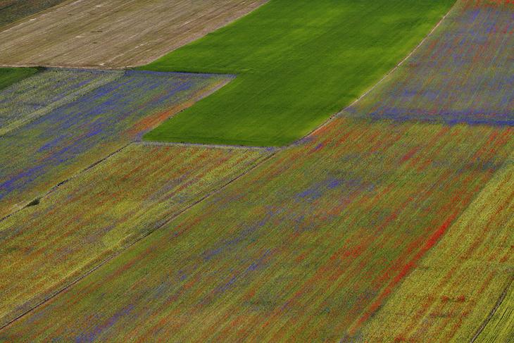 Blooming, Castelluccio di Norcia 10
