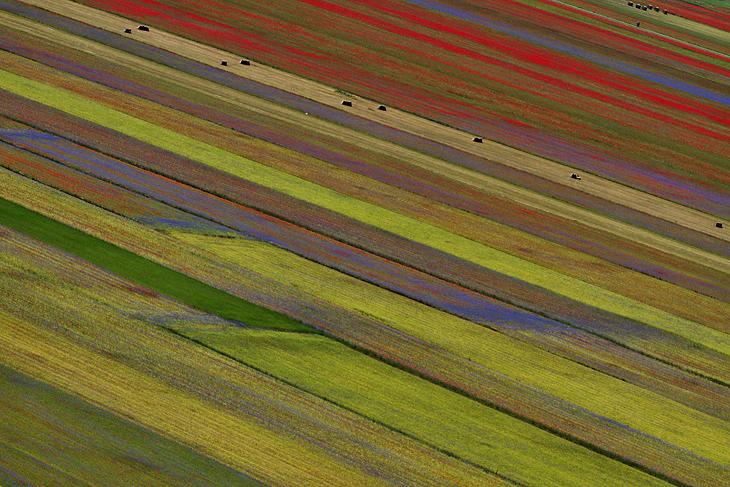 Blooming, Castelluccio di Norcia 11