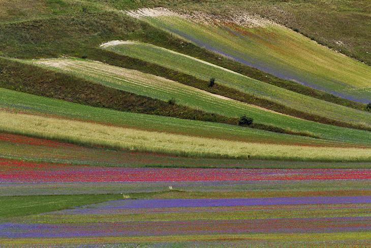 Blooming, Castelluccio di Norcia 15