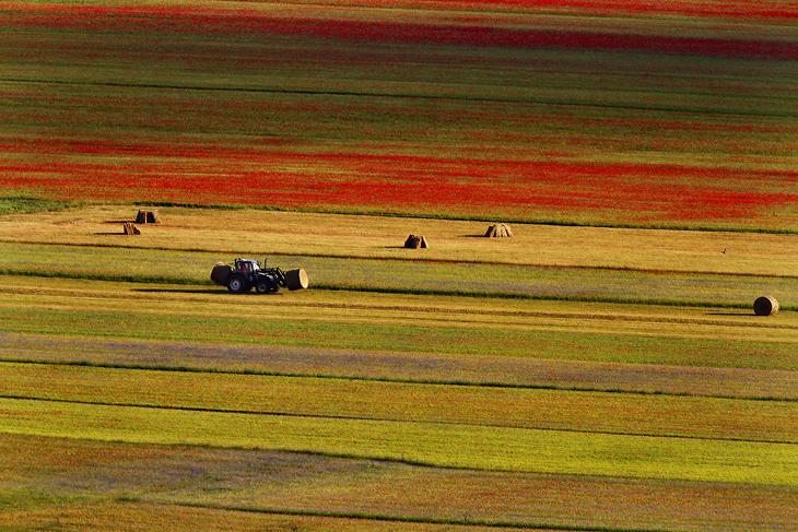 Blooming, Castelluccio di Norcia 18