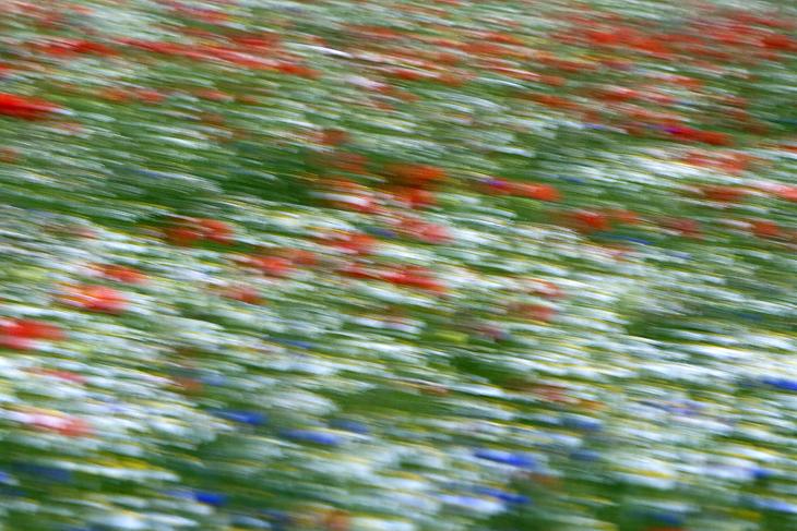 Blooming, Castelluccio di Norcia 22