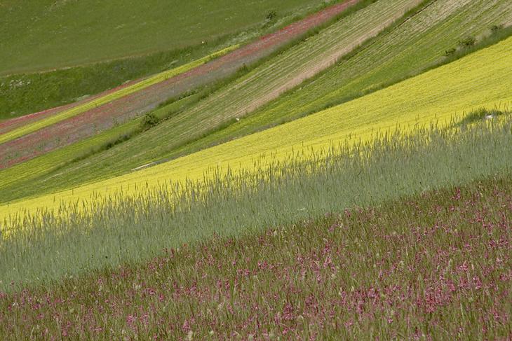 Blooming, Castelluccio di Norcia 24