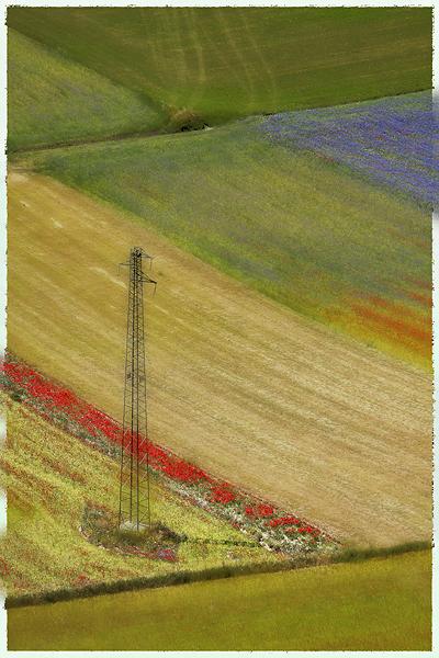 Blooming, Castelluccio di Norcia 28