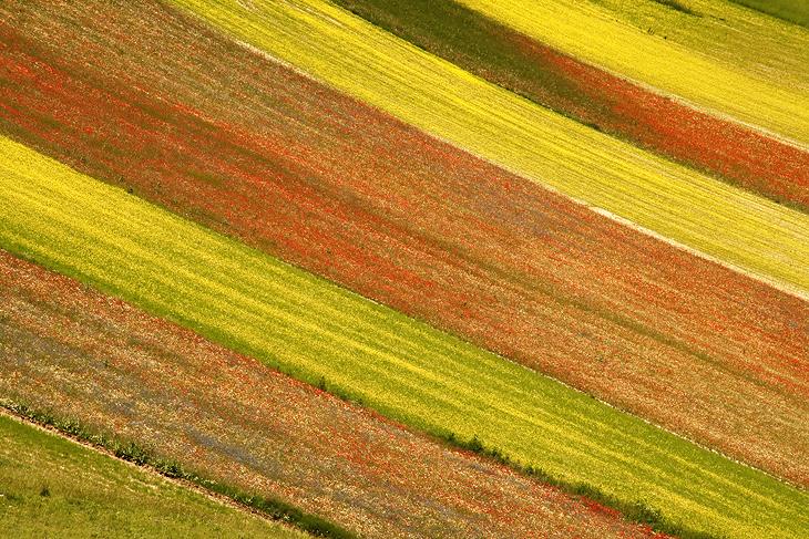 Blooming, Castelluccio di Norcia 36