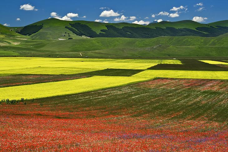 Blooming, Castelluccio di Norcia 38
