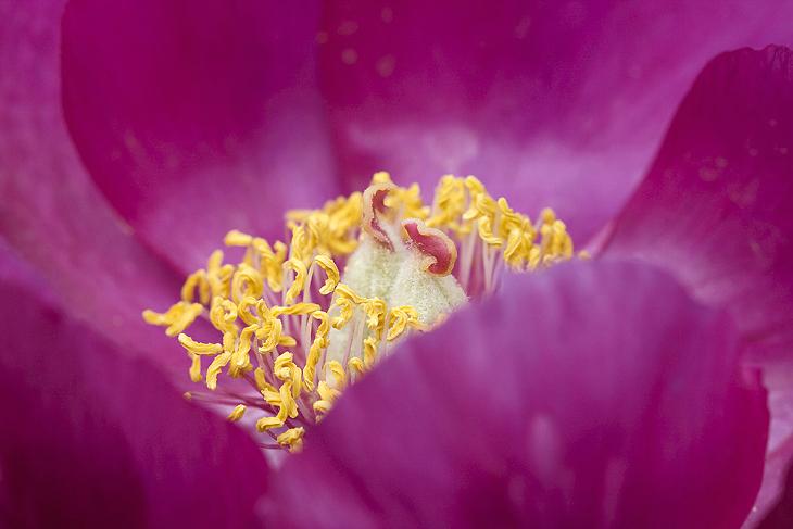 Blooming, Castelluccio di Norcia 49